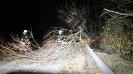 Usuwania drzew stwarzających zagrożenie  w komunikacji drogowej