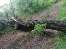 Powalone drzewa 2020r.