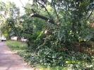 Usuwanie skutków gwałtownych burz lipiec 2015_19